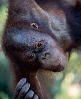 bali zoo (1 of 1)