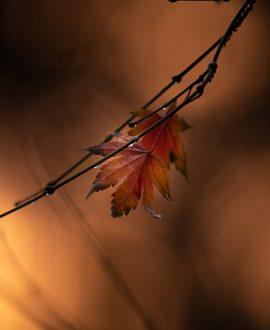 autumn light (3 of 5)